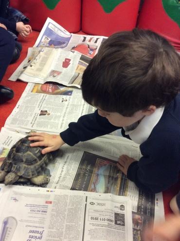 Tortoise (3)