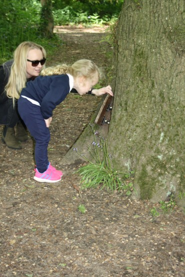 Yeovil Country Park (42)