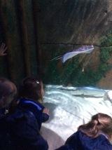 Sealife (2)