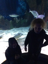Sealife (4)