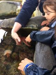 Sealife (7)