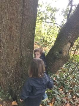 Looking for bat habitat