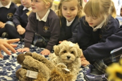 Nursery are visited by a puppy