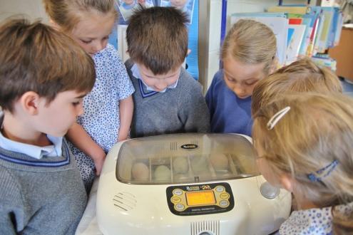 The Pre-Prep incubator