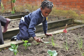 Reception planting vegetables