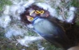 Pre-Prep Bird Box Camera