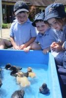 Pre-Prep Ducklings