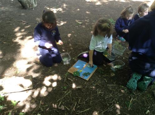 Reception Forest School