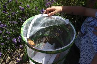 Pre-Prep caterpillars to butterflies