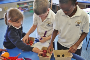 Year 1 Fruit and Vegetable Market Stall