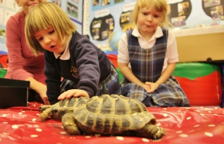 Tortoises visited Nursery