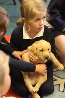 Year 2 meet Puppies