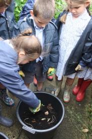 Year 1 Planting Potatoes